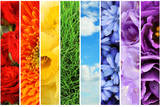 Collage of Beautiful Flowers, Grass and Sky Prints by  Yastremska