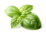 Fresh Basil Leaves in Closeup Photographic Print by  dionisvera