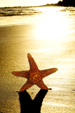 Seastar on the Shore of a Beach at Sunset Posters by  nito