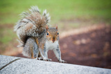 Traveling Squirrel Photo Print Poster Prints