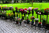 Row of Flowers in Sweden Photo Print Poster Print