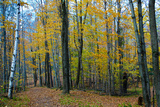 Fall Foliage Photo Print Poster Affischer
