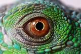 Iguana Eye Fotografisk tryk af  NagyDodo
