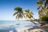 Les Salines Beach with Palm Trees in Martinique Photographic Print by Matteo Colombo