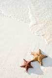 Starfish on Tropical Beach Fotografie-Druck von Mehmed Zelkovic