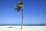 Single Palm Tee on Beach. Photographic Print by Grant Faint