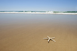 Single Starfish on Tropical Beach. Photographic Print by Southern Stock