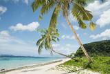 Palm Trees on Lalomanu Beach in Samoa Photographic Print by Hannah Bichay
