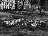 Fred Musto - Springtime in Green Park - Fotografik Baskı