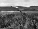 Fred Musto - Pewsey White Horse Fotografická reprodukce