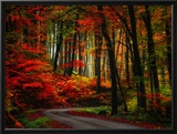 Colorful Way Framed Photographic Print by Philippe Sainte-Laudy