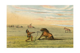Racial, Wild Horse C1830 Giclee Print by George Catlin