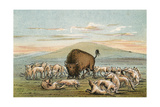Buffalo and Coyotes Giclee Print by George Catlin