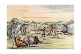 Racial, Hunting Buffalo Giclee Print by George Catlin