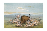 Bison and Coyotes Giclee Print by George Catlin