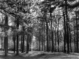 Forest of Dean Photographic Print by Fred Musto