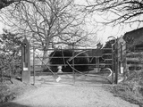 Unusual Farmyard Gate Photographic Print by Fred Musto