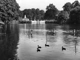 Kensington Gardens Lake Photographic Print by Fred Musto