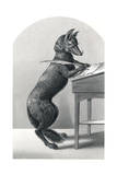 Mr Fox the Lawyer Giclee Print by H Planquet