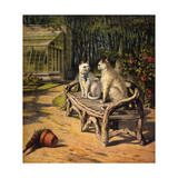 Two Cats on Garden Bench Giclee Print by H.w. Petherick