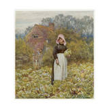 Cutting Cabbages, Allingh Giclee Print by Helen Allingham