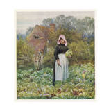 Woman Cuts Cabbages Giclee Print by Helen Allingham