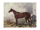 Hermit (Racehorse) 1867 Giclee Print by Harry Hall