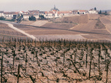 Epernay Vineyard, 1987 Photographic Print by Hilary Evans