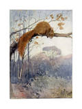 Squirrel in Tree C1917 Giclee Print by Honor C. Appleton