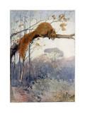 Squirrel in Tree C1917 Premium Giclee Print by Honor C. Appleton