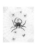 Barbary Spider Giclee Print by J. Pass