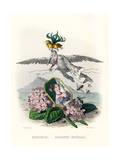 Grandville Hortensia Premium Giclee Print by JJ Grandville