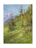 Alpine Meadow Giclee Print by John Fulleylove