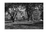 Alcott, Concord Mass Home Giclee Print by JR Davis