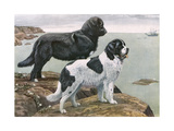Newfoundlands by Water Giclee Print by Louis Agassiz Fuertes