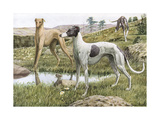 Greyhounds in Country Impression giclée par Louis Agassiz Fuertes