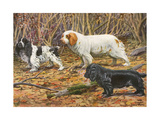 Spaniels (Puertes) Giclee Print by Louis Agassiz Fuertes