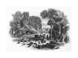 Farmyard Scene, C. 1860 Giclee Print by Mason Jackson