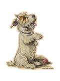 Dogs, Sealyham, Dawson Giclee Print by Lucy Dawson