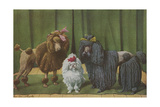 Three Poodle Specimens Giclee Print by Louis Agassiz Fuertes