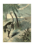 Hunting Ostrich Giclee Print by Oswald Levens