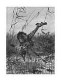 Lion Attacks Giraffe Giclee Print by Richard Friese