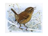 Birds, Wren Giclee Print by Robert Gillmor