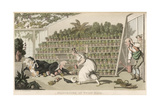 Dr Syntax, Misfortune at Tulip Hall Giclee Print by Thomas Rowlandson