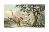Doctor Syntax Pursued by a Bull Giclee Print by Thomas Rowlandson
