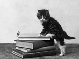 Tabby Kitten on Books Photographic Print by Thomas Fall