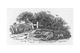 Horse Waiting to Die Giclee Print by Thomas Bewick