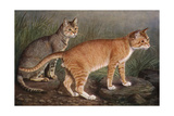 Abyssinian and Indian Giclee Print by W. Luker