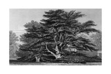 Peper Harow Park, Surrey Giclee Print by Thomas Allom