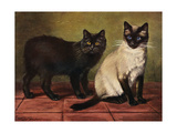 Manx and Siamese Cats Giclee Print by W. Luker